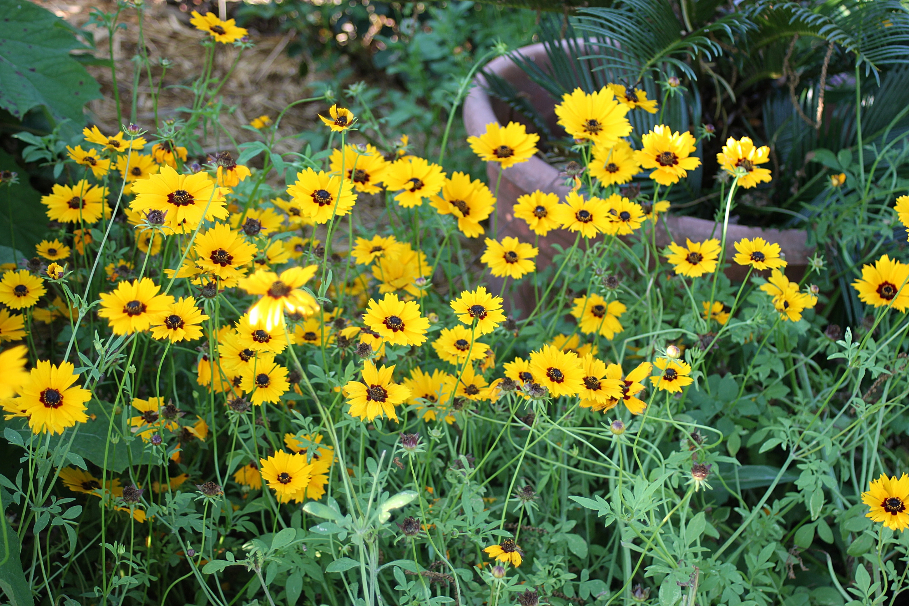 The guilford garden of hartford alabama beautifulgardener img9721 dhlflorist Image collections